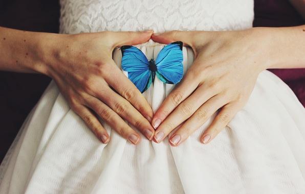 Картинка бабочка, крылья, руки, синие