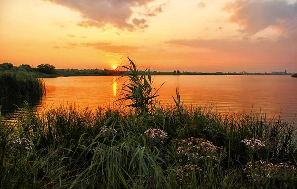 Картинка трава, закат, цветы, река, берег, Россия, Урал