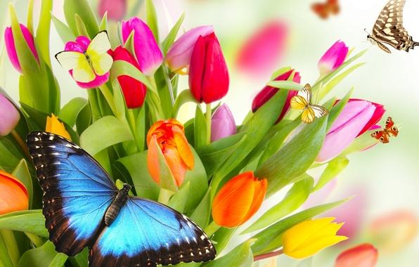 Картинка бабочки, цветы, яркие, красота, лепестки, тюльпаны, красные, red, розовые, оранжевые, разноцветные, yellow, pink, жёлтые, flowers, ...