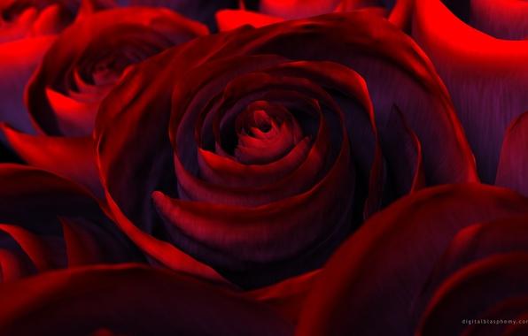 Картинка цветы, рендеринг, роза, красота, лепестки, red, красная, flower, Rose, beautiful nature wallpapers