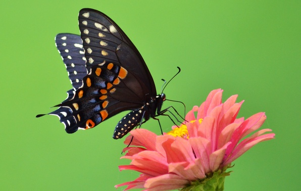 Картинка цветок, green, бабочка, крылья, лепестки, зеленые, усики, flower, wings, butterfly, petals, хоботок, antennae, open wings, …