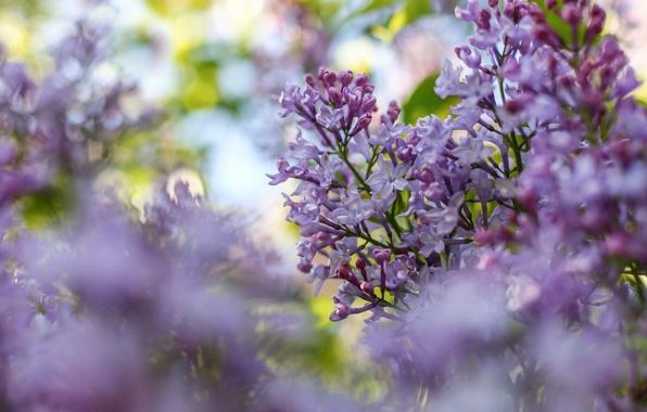 цветы фото и картинки обои на рабочий стол