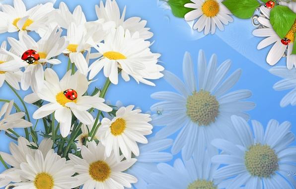 Картинка цветы, природа, коллаж, божья коровка, ромашка, насекомое