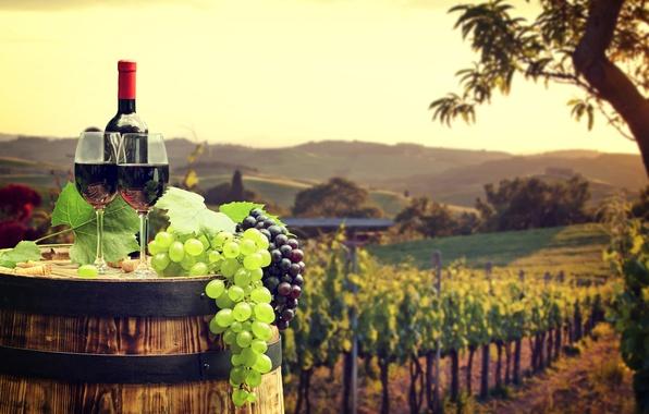 Картинка поле, листья, пейзаж, красный, зеленый, вино, бутылка, бокалы, виноград, пробки, бочка, боке, плантация