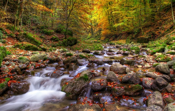 Картинка осень, лес, листья, вода, деревья, природа, река, камни
