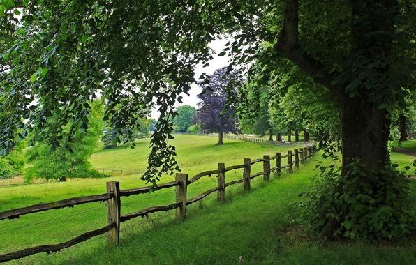 Картинка дорога, трава, деревья, пейзаж, горы, природа, путь, grass, road, trees, landscape, nature, view, tree, scenery, …
