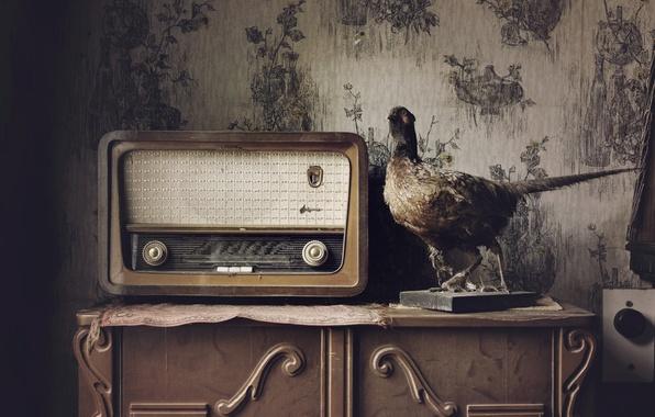 Картинка дом, птица, радио