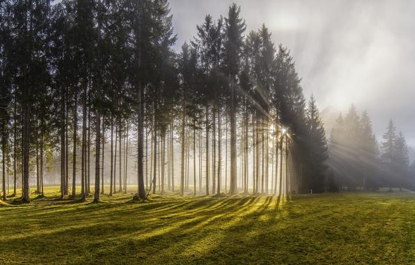 Картинка лес, солнце, лучи, свет, деревья, природа, туман, Австрия