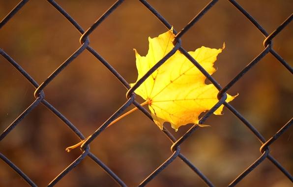 Картинка осень, макро, желтый, лист, сетка, забор, прутья