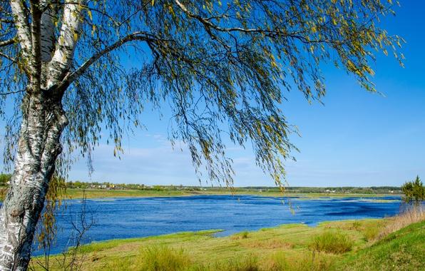 Картинка поле, лето, небо, трава, вода, природа, путешествия, река, весна, Россия, речка, Пейзаж, берёза, Псков, река …