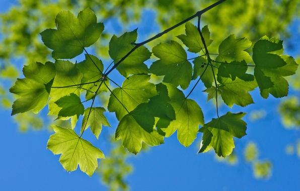 Картинка лето, небо, макро, ветки, листва