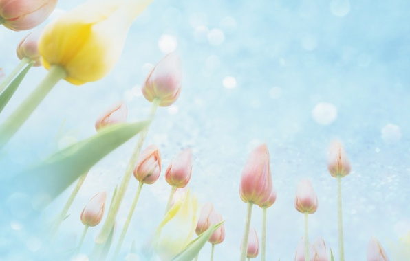 Картинка небо, цветы, тюльпаны