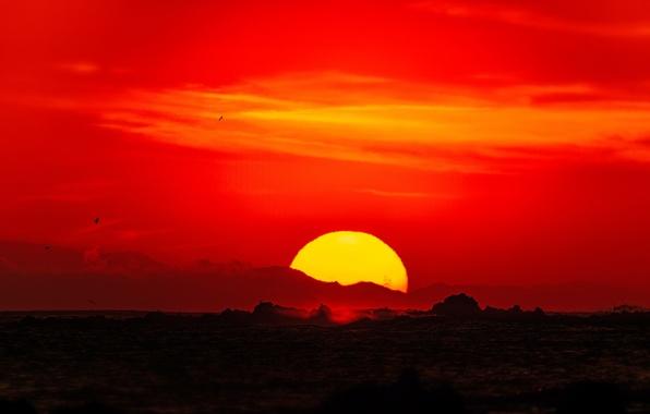 Картинка море, волны, небо, солнце, пейзаж, закат, птицы