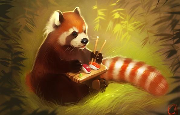 Картинка медведь, арт, панда, суши, red panda