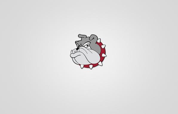 Картинка морда, животное, собака, минимализм, голова, шипы, бульдог, серьезный, светлый фон, bulldog, красный ошейник
