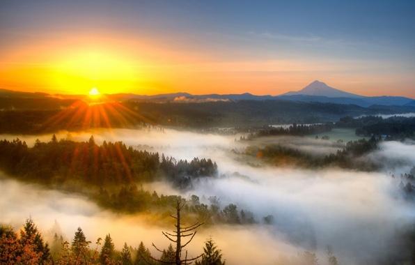 Картинка лес, горы, природа, туман