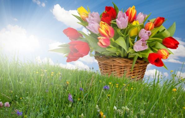 Весна травка солнечные лучи цветы