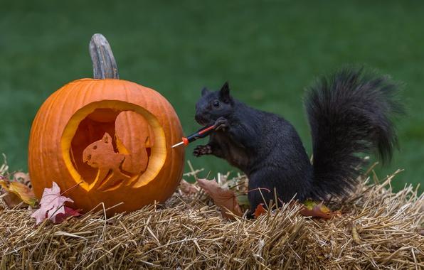 Картинка осень, ситуация, белка, тыква, солома, хэллоуин