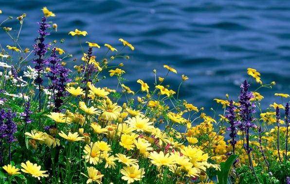 Заставка на рабочий стол лето цветы природа