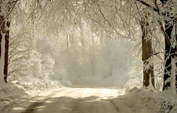 Картинка зима, дорога, свет, снег, деревья, ветки, природа