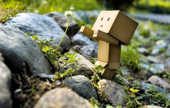 Картинка зелень, цветок, природа, камни, robot, danbo, Danboard, box, toy, одуваньчик, flower