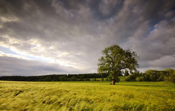 Картинка поле, лето, пейзаж, дерево