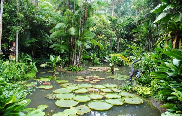 Картинка деревья, пруд, сад, Сингапур, кусты, кувшинки, Botanic Gardens