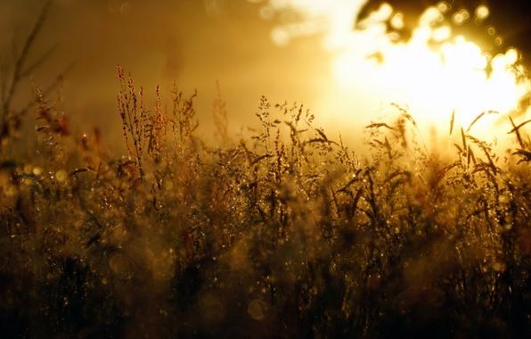 Картинка трава, ночь, туман