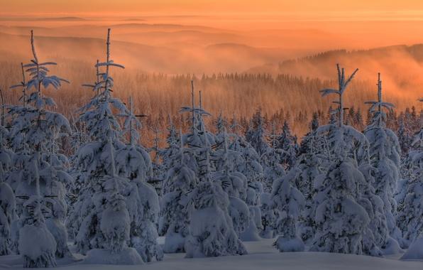 Картинка небо, снег, туман, елки, Зима