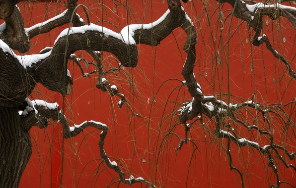 Картинка снег, природа, дерево