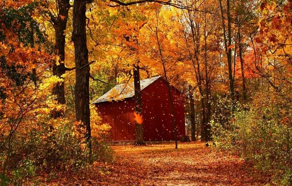 Картинка Природа, Тропинка, Осень, Деревья, Лес, Листья, Домик, Парк, Пейзаж, Дорожка