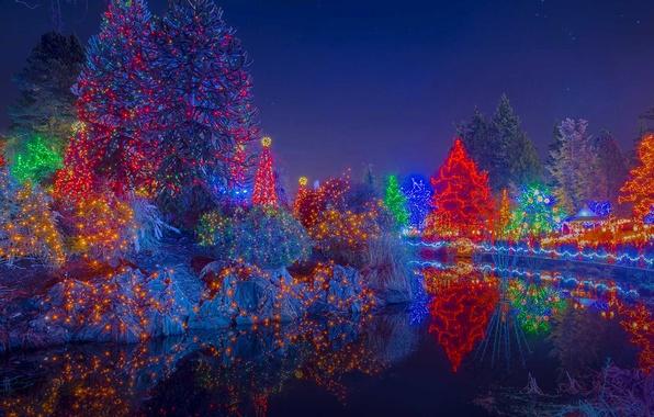 Картинка деревья, огни, праздник, Канада, Рождество, Ванкувер, ботанический сад, фестиваль огней, VanDusen Botanical Garden, плуд