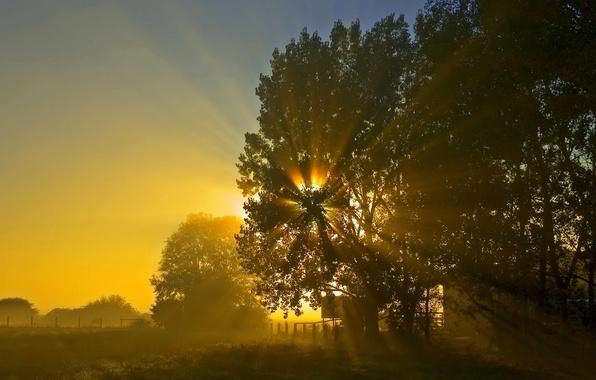 Картинка солнце, ночь, восход, дерево