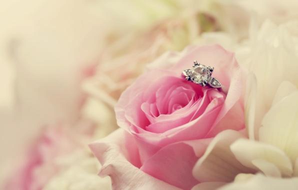 Картинка цветок, макро, розовая, роза, кольцо