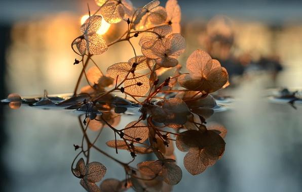 Картинка листья, вода, солнце, прожилки