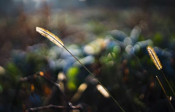 Картинка трава, макро, свет, природа, блики, боке