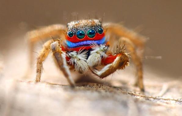 Картинка глаза, макро, паук, насекомое