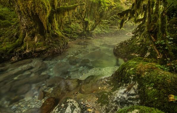 Картинка лес, деревья, река, ручей, камни, заросли, мох