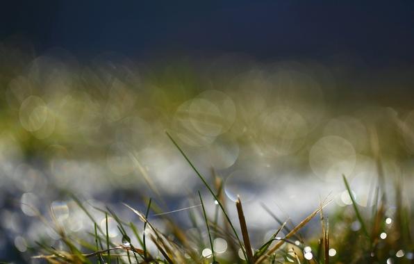 Картинка зелень, вода, капли, макро, роса, блики, Трава, утро, боке