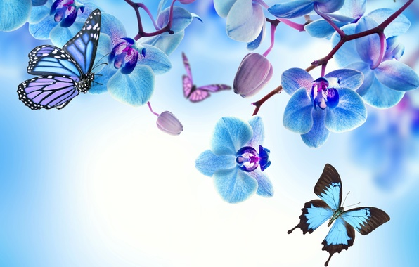 Картинка бабочки, цветы, орхидея, blue, flowers, beautiful, orchid, butterflies