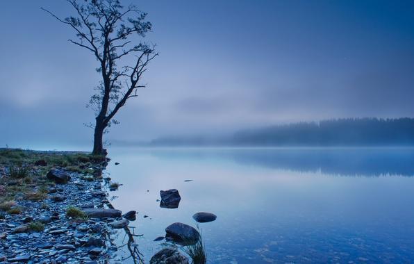 Картинка лес, небо, деревья, туман, озеро, отражение, синева, дерево, берег, Шотландия, Великобритания