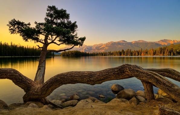 Картинка лес, горы, озеро, дерево, берег