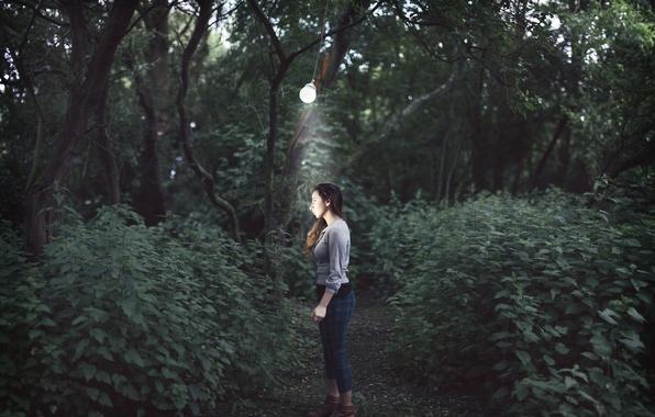 Картинка лес, девушка, лампа, Overwhelming darkness