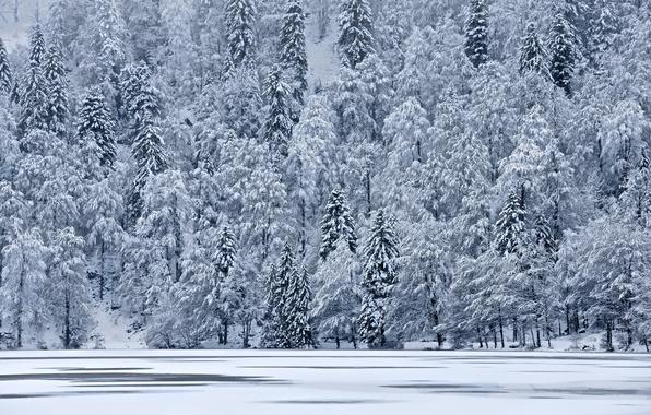Картинка лед, зима, снег, деревья, озеро, елки, гора, склон