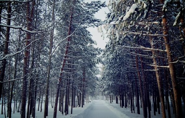 Картинка зима, осень, снег, деревья, любовь, пейзаж, снежинки, природа, настроение, октябрь, березы, 2014, Ноябрьск, ЯНАО, ЯМАЛ