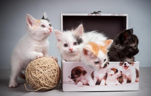 Картинка клубок, котята, пушистики, box, коробочка, kittens, tangle, pussies