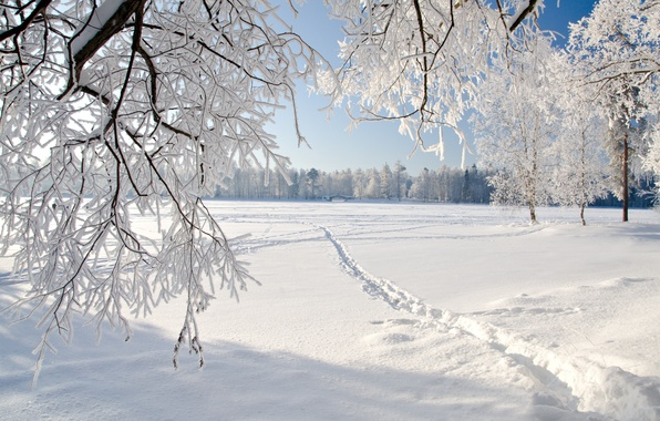 Картинка лед, зима, пейзаж, природа, ice, landscape, nature, winter, weeping tree, плача деревья