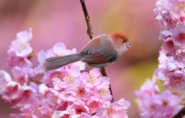 Картинка цветы, птица, ветка, весна, клюв, сад, хвост