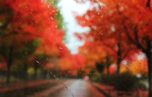 Картинка дорога, осень, стекло, капли, деревья, дождь, размытость