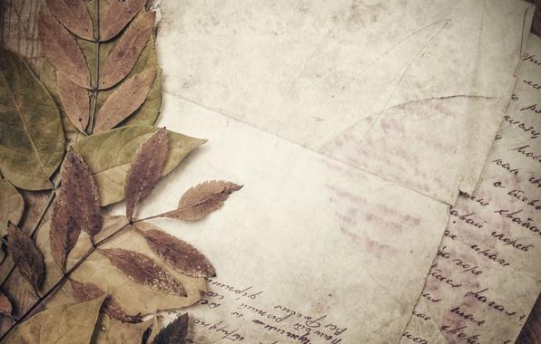 Картинка бумага, строки, vintage, винтаж, сухие листья